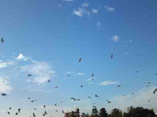 many sea gulls flying in the sky