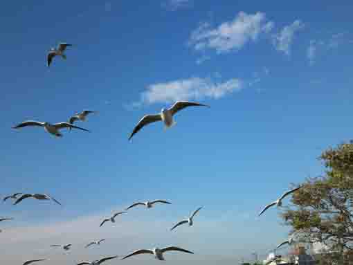 sea gulls flying in the blue sky