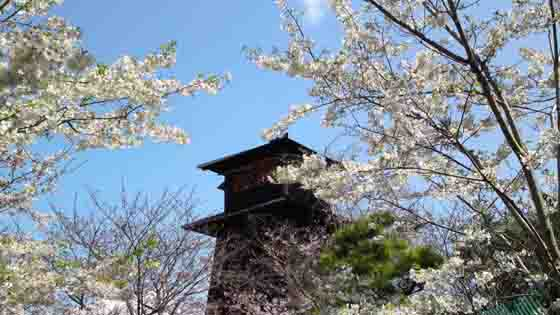 a fire lookout covered with sakura