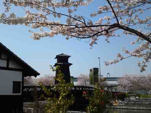 cherry blossoms and Edo style buildings