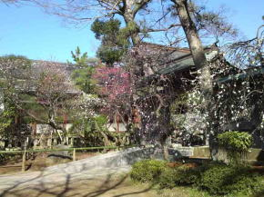 the plum trees in Shirahata Tenjin Shrine