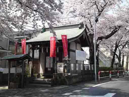 Ukishima Benzaiten Shrine and Sakura