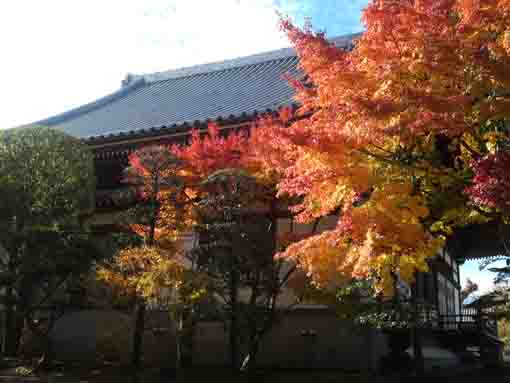 colored leaves behind the main hall