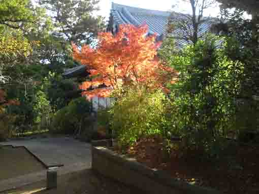 colored leaves before a bridge in Daiunji
