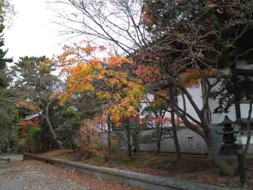 colored leaves in Daiunji